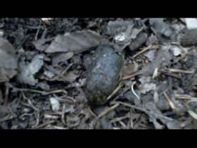 KV Käfer - FUN Video